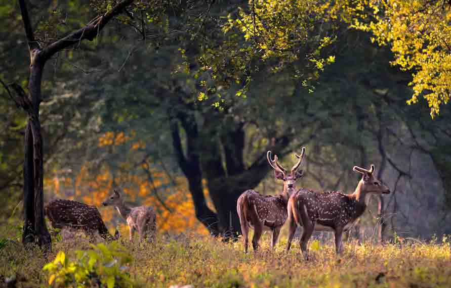 Cheap Vacation Packages | India Tour Packages | Central India